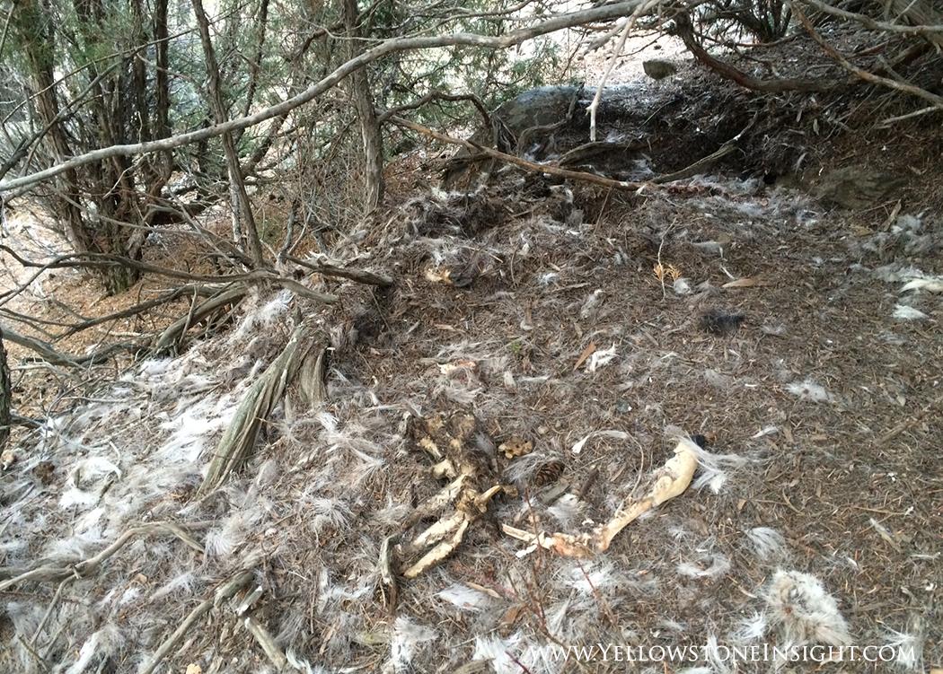 Cougar Trail_4