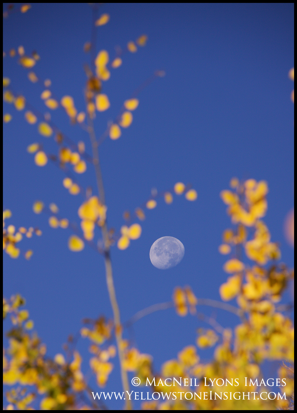 photoday-aspen-moon_8548