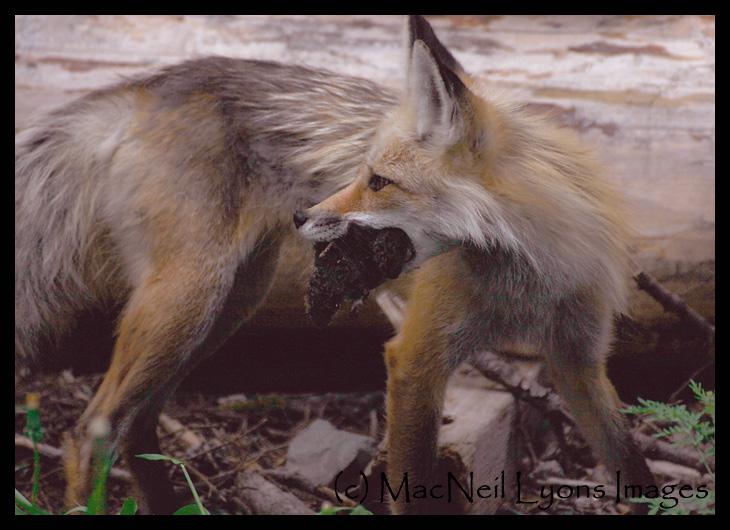 Fox-Stash-UExposed_8889