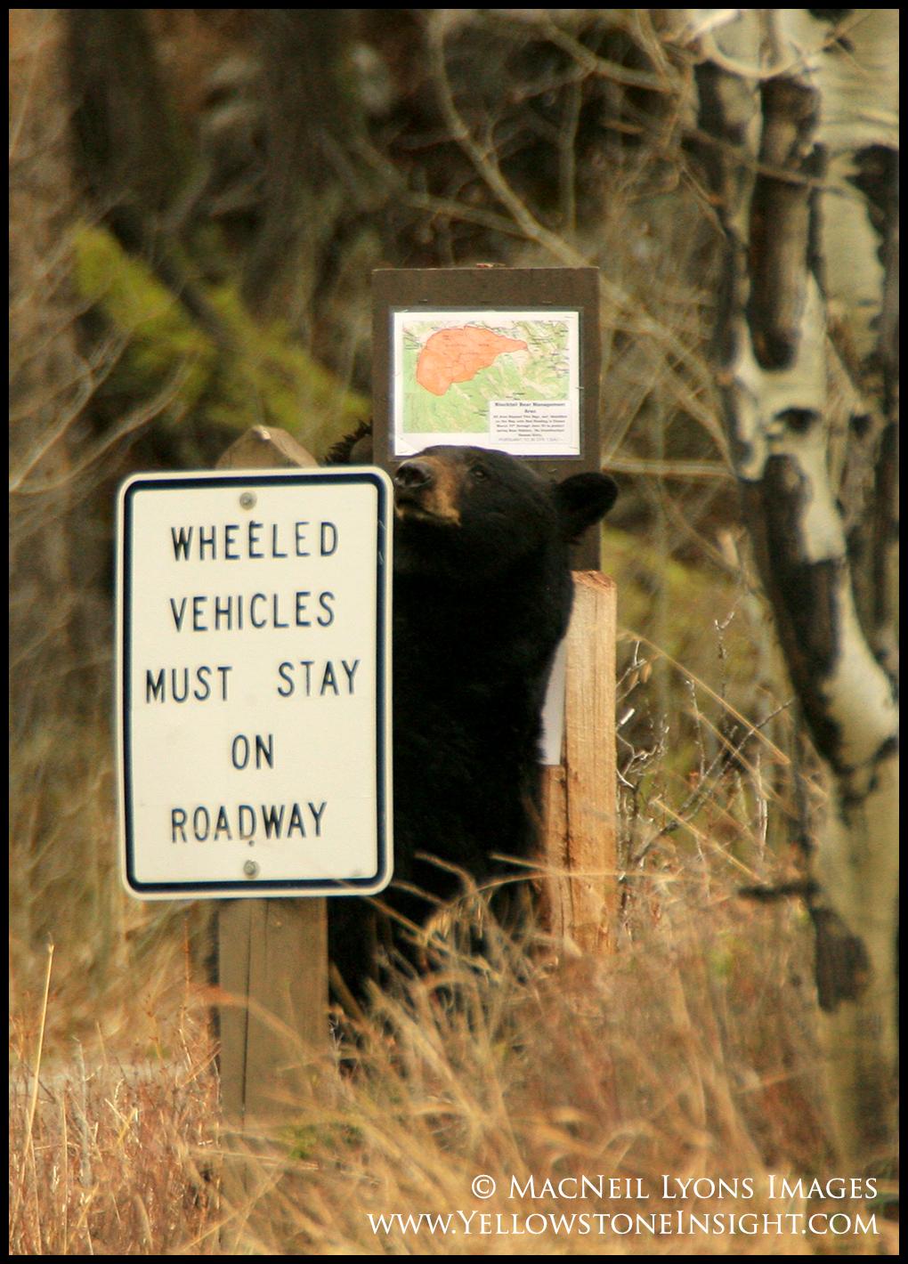 Black Bear Sign Rub_5893