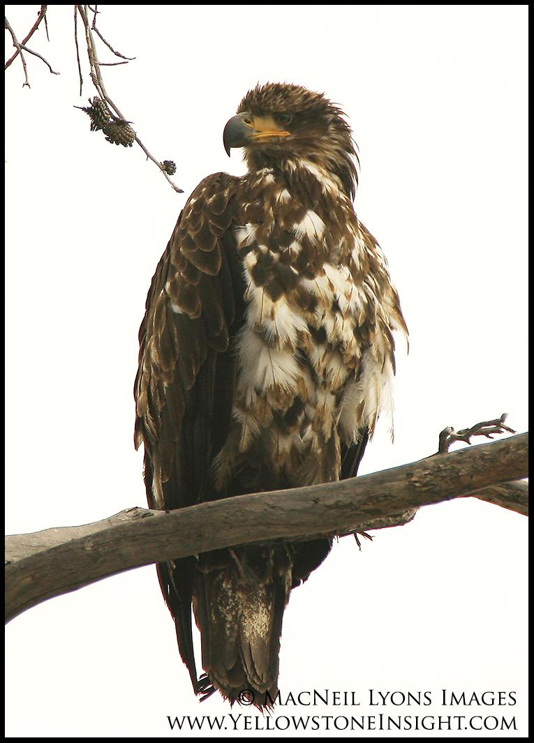 bald-eagle-lake_7418
