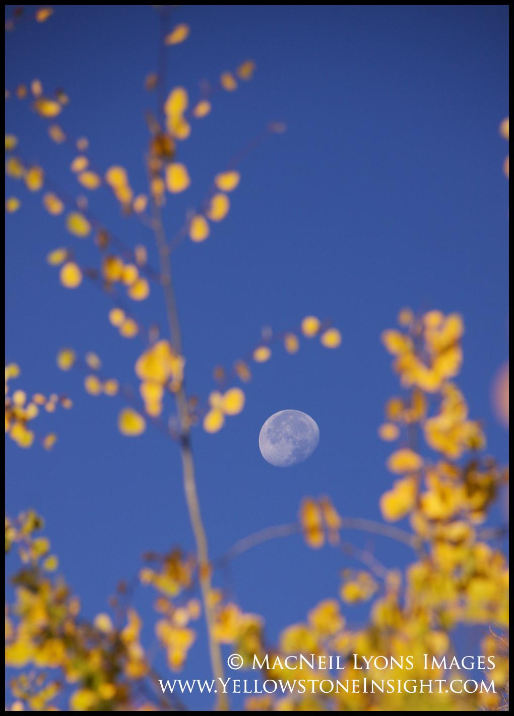 photoday-aspen-moon_8548